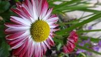 برای دیدن سایز بزرگ روی عکس کلیک کنید  نام: Flower 1.jpg مشاهده: 24 حجم: 193.2 کیلو بایت