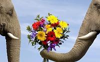 برای دیدن سایز بزرگ روی عکس کلیک کنید  نام: elephant_flowers_bouquet_73138_2560x1600.jpg مشاهده: 147 حجم: 1.36 مگابایت