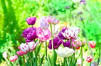 برای دیدن سایز بزرگ روی عکس کلیک کنید  نام: flower-bulbs.jpg مشاهده: 19 حجم: 418.6 کیلو بایت