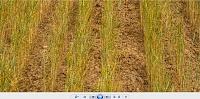برای دیدن سایز بزرگ روی عکس کلیک کنید  نام: Capture2.JPG مشاهده: 39 حجم: 278.3 کیلو بایت